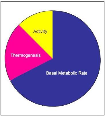 basalmetabolicrate